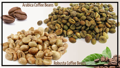 Different between coffee beans: arabica and robusta by coffee addicted